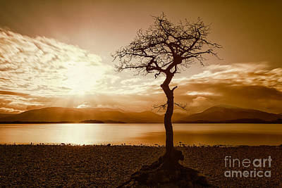 Milarochy Bay Tree Loch Lomond Poster