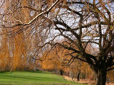 Mild Winter In Mayesbrook Park - Dagenham Poster by Mudiama Kammoh