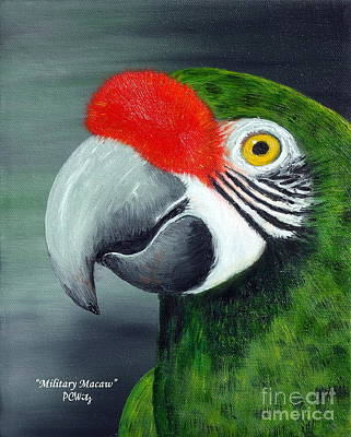 Military Macaw Poster