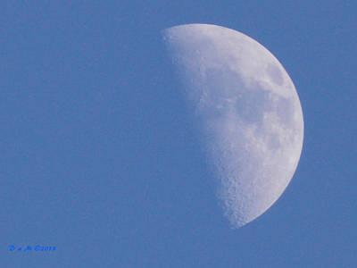 Poster featuring the photograph Milk Moon  by Deborah Moen
