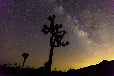 Milky Way Over Joshua Trees At Sunset Poster