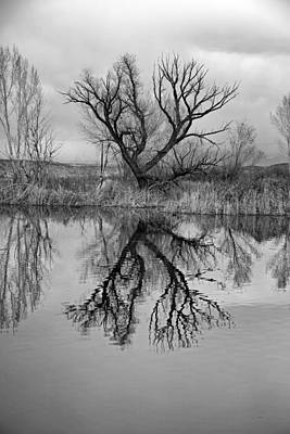 Mill Pond Tree Poster