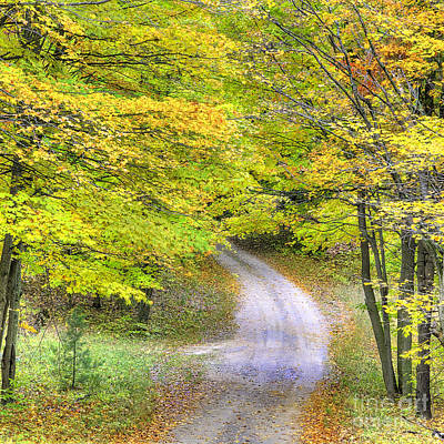 Miller Hill Road In Fall Poster