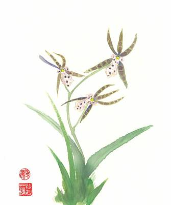 Miltonia Orchid Poster