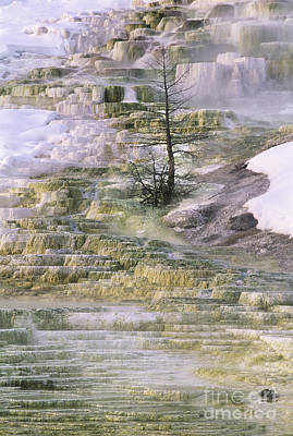 Poster featuring the photograph Minerva Springs Terraces Yellowstone National Park by Dave Welling