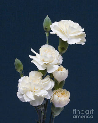 Mini Carnations Poster by ELDavis Photography