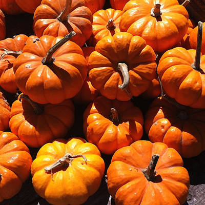 Mini Fall Pumpkins Poster by Denyse Duhaime
