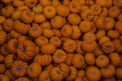 Mini Pumpkins Poster by Garry Gay