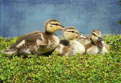 Mini Quackers 2 Poster