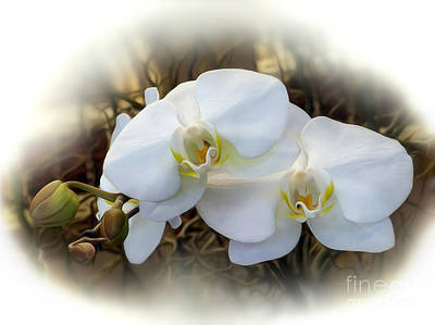 Miniature Orchid Poster