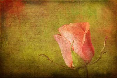 Miniature Rose Poster by Robert Jensen