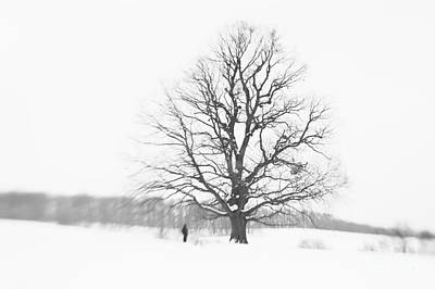 Minimal Winter Landscape With Man And Tree Poster by Photo Cosma