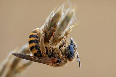 Mining Bee Poster
