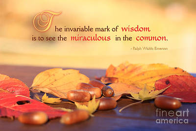Miraculous In The Common On A Fine Autumn Day Poster by Beverly Claire Kaiya
