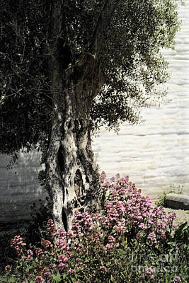 Poster featuring the photograph Mission San Jose Tree Dedicated To The Ohlones by Ellen Cotton