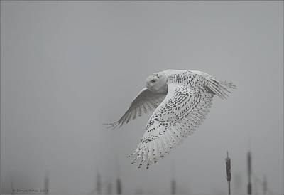 Misty Day Snowy Poster by Daniel Behm