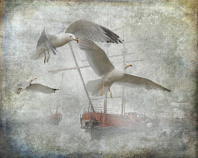 Misty Harbor With Gulls Poster