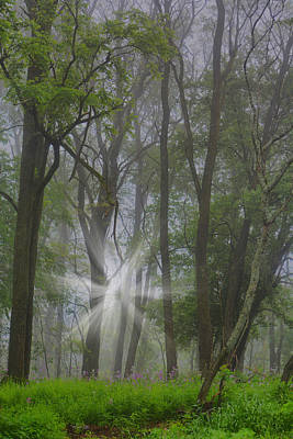 Misty Meadow Poster