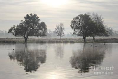 Misty Morning In Bushy Park London 2 Poster