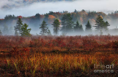 Misty Morning Meadow I - Cranberry Wilderness Poster