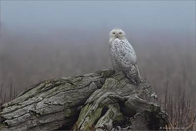 Poster featuring the photograph Misty Morning Snowy Owl by Daniel Behm