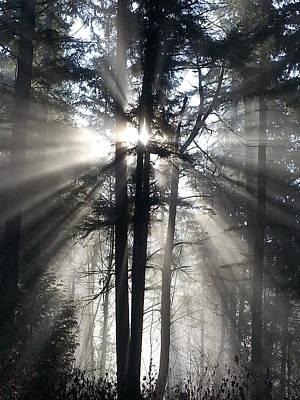 Misty Morning Sunrise Poster