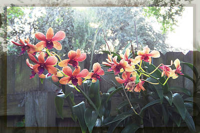 Misty Orchids Poster by Ginny Schmidt