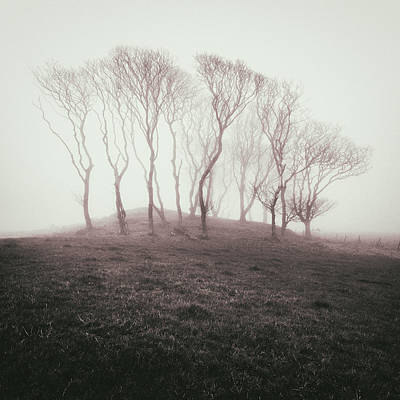 Misty Trees Poster by Dave Bowman