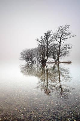 Misty Trees Poster by Grant Glendinning