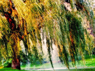 Misty Weeping Willow Tree Dreams Poster