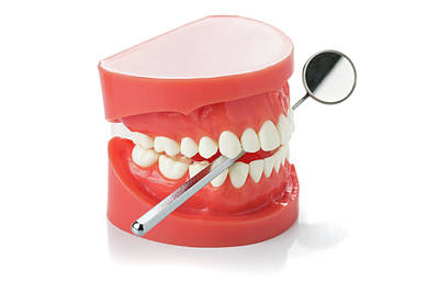 Model Of Human Jaw With Dental Mirror Poster