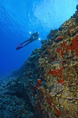 Molokini Maui Hawaii Usa Scuba Diver At Poster by Stuart Westmorland