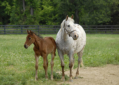 Poster featuring the photograph Mom And Foal by Sami Martin