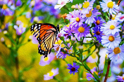 Monarch Butterfly 4 Poster
