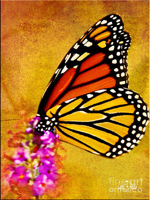 Monarch Butterfly Color Splash Sunset Poster