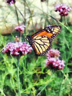 Monarch Butterfly On Pink Lantana Poster by Susan Savad