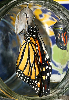 Poster featuring the photograph Monarch In A Jar by Steve Augustin
