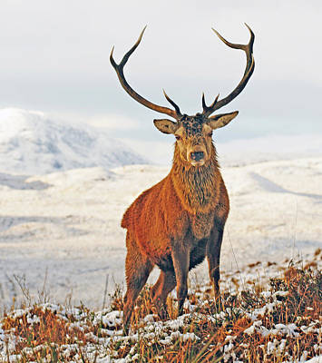Monarch Of The Glen Poster by Pat Speirs