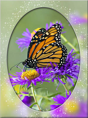 Monarch On Astor Poster by Judy  Johnson