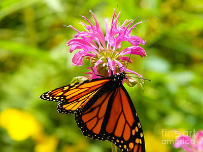 Monarch Under Flower Poster