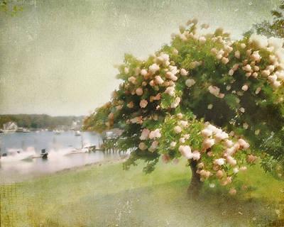 Monet's Tree Poster
