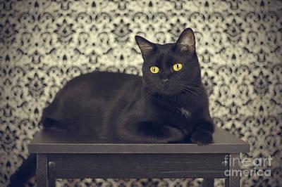 Mongo The Robust Cat Poster by Jennifer Ramirez