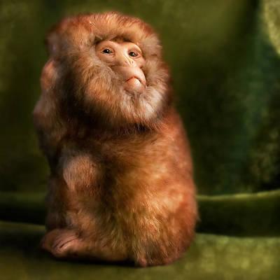 Monkey Poster by Diane Bradley