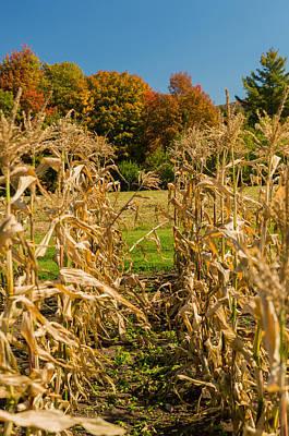 Monks Fall Corn Field Poster