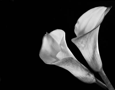 Monochrome Calla Lily IIi Poster by David and Carol Kelly