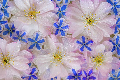 Montage Of Cherry Blossoms And Blue Poster by Jaynes Gallery
