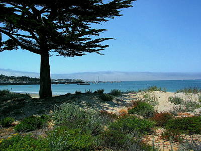 Monterey Dunes Poster