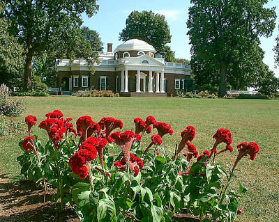 Monticello Cockscomb In Bloom Poster