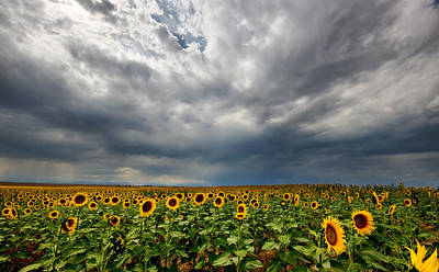 Poster featuring the photograph Moody Skies Over The Sunflower Fields by Ronda Kimbrow