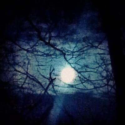 Moon Framed By Tree Branches Poster